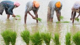 দিল্লিতে প্রতিবাদী কৃষকের আত্মহত্যা